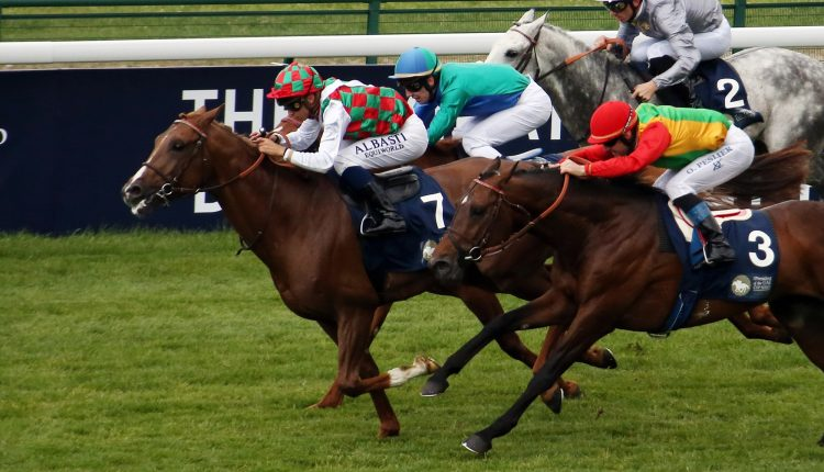 UAE President Cup carries Arabian Racing to Pimlico Race Course